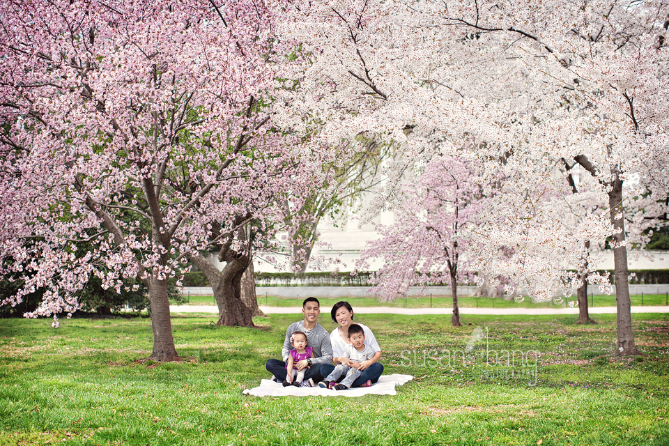 Cherry blossoms-family