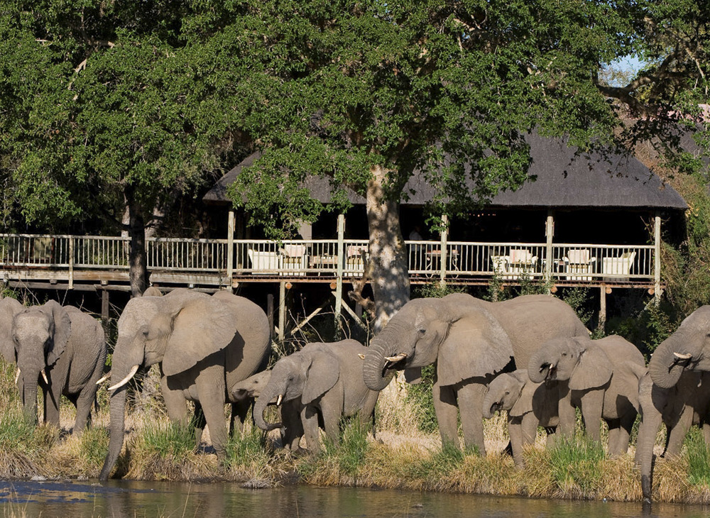 Family of Elephants quenching their thirst at the Lodge's watering hole