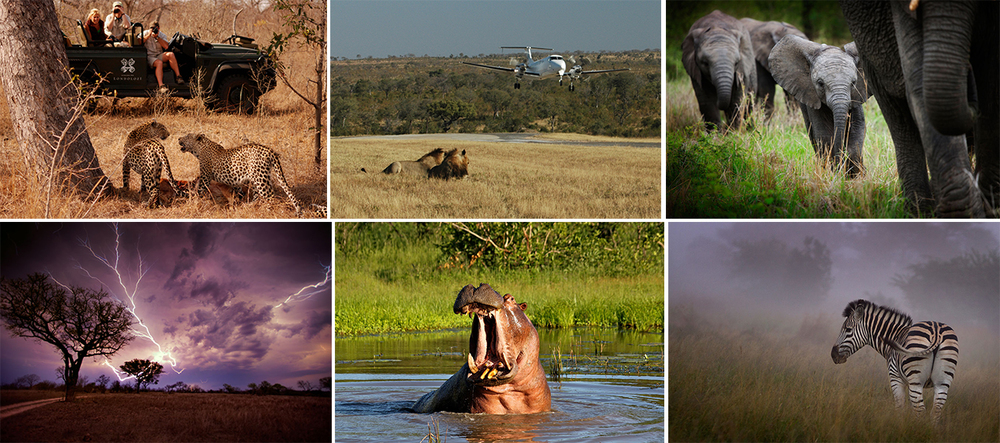 Unrivaled Safari Experience - Located within the world famous Kruger National Park, elephants and buffalos roam free alongside the largest population of white rhinos and lions on the African continent.