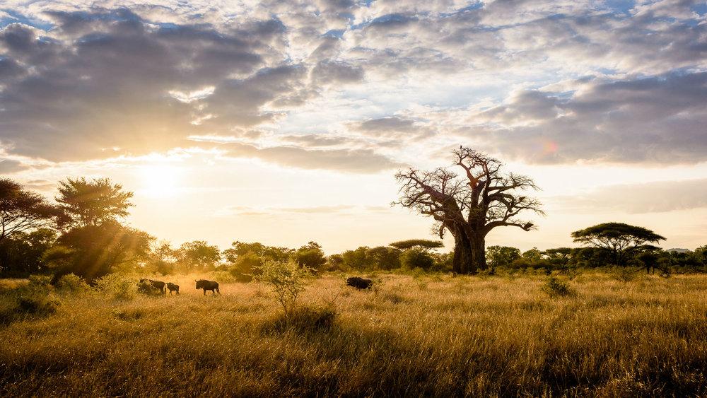 singita pamushane safari.jpg