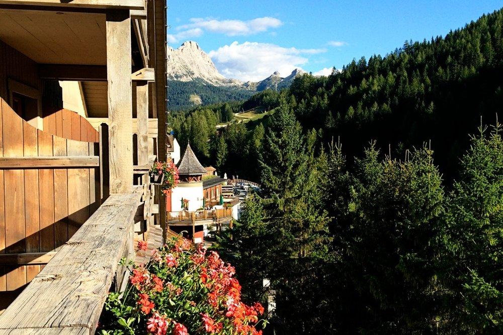 rosa alpina 2.jpg