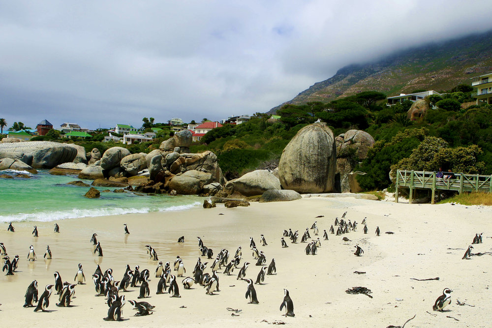 Boulders Beach. Image courtesy of Cape Town Tourism.jpg