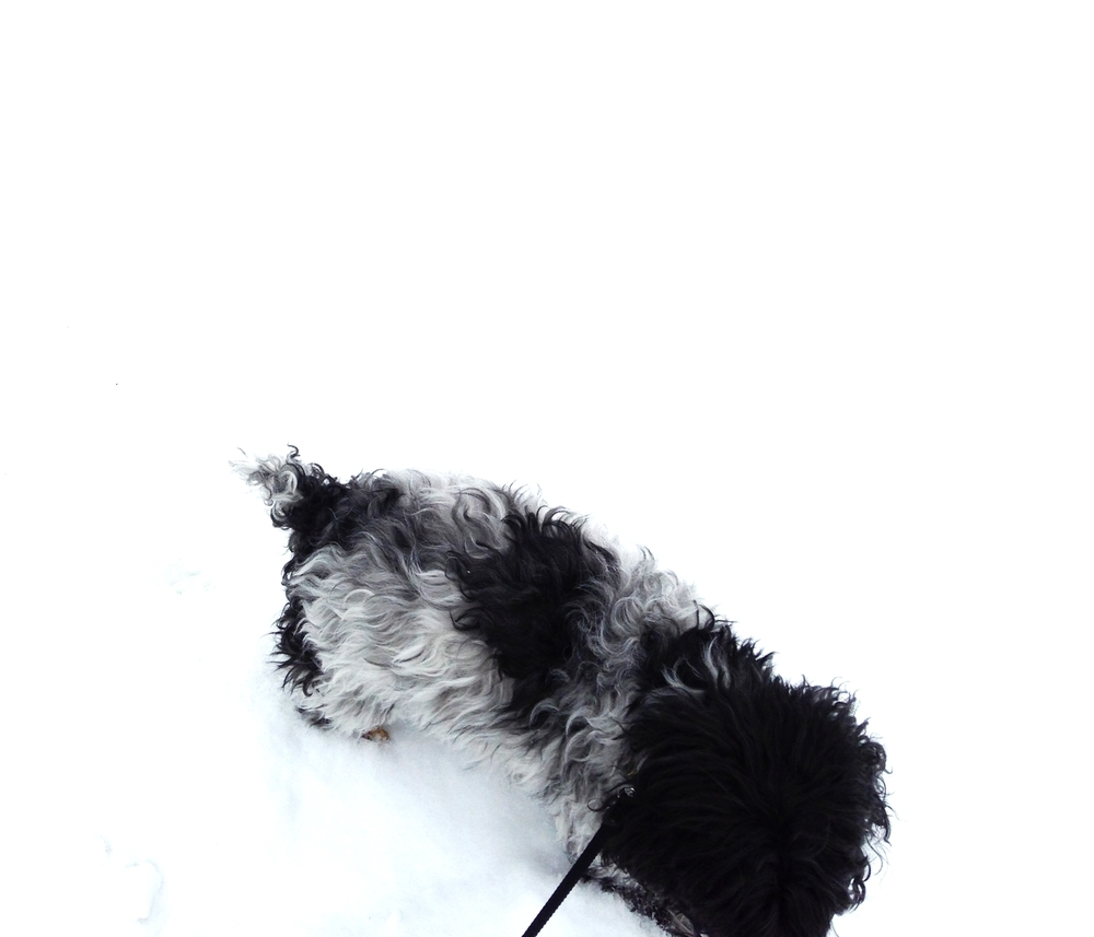 incredibly true facts dog in the snow