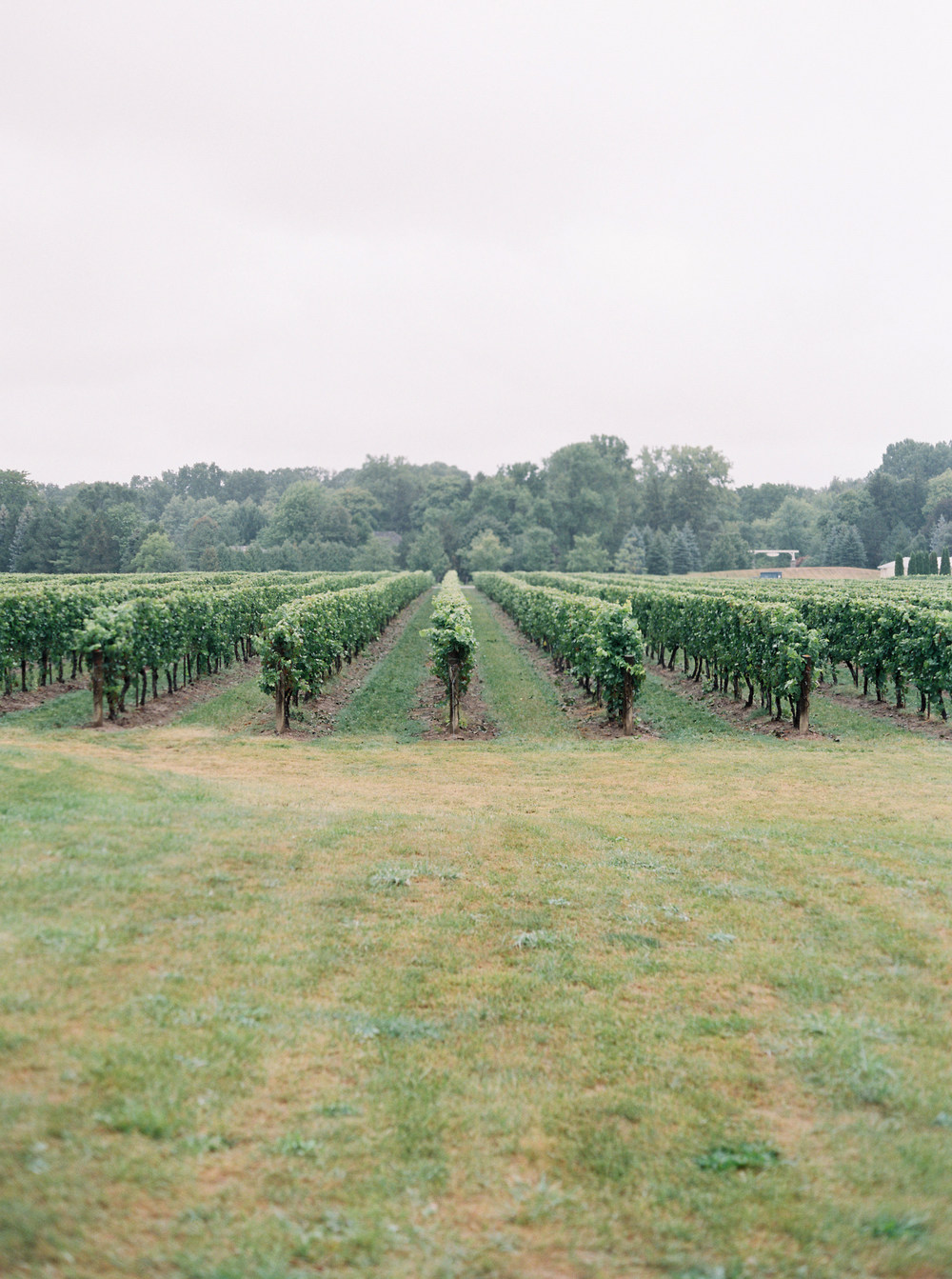 Kurtz-Orchards-Niagara-on-the-Lake-Wedding-photography-by-When-He-Found-Her-041.JPG
