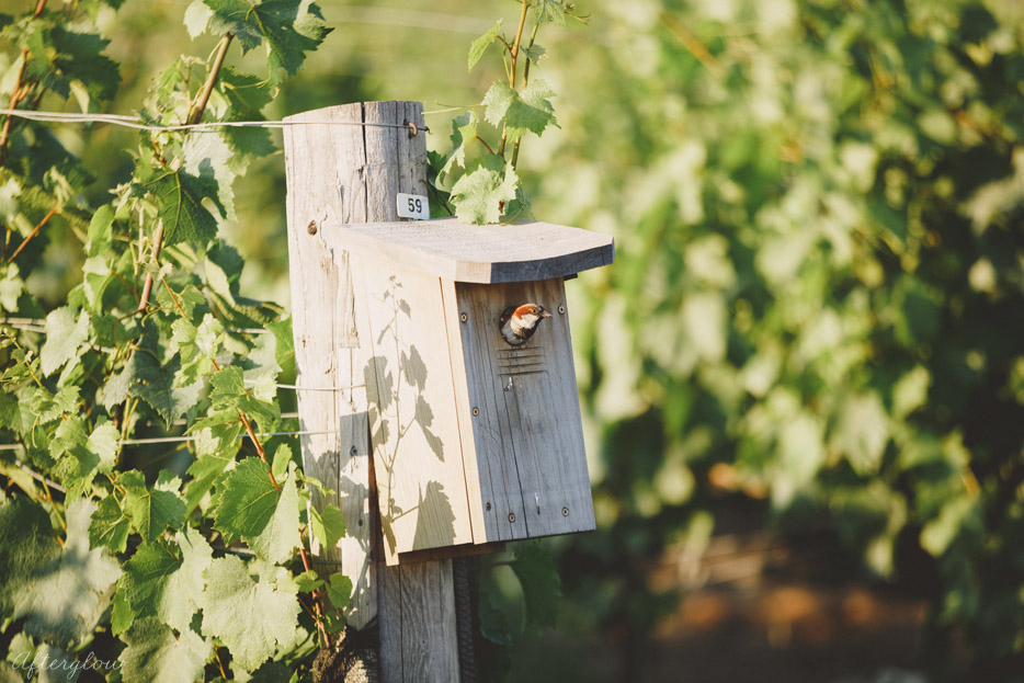 069-sparrow-bird-in-the-ravine-vineyard-birdhouse.jpg