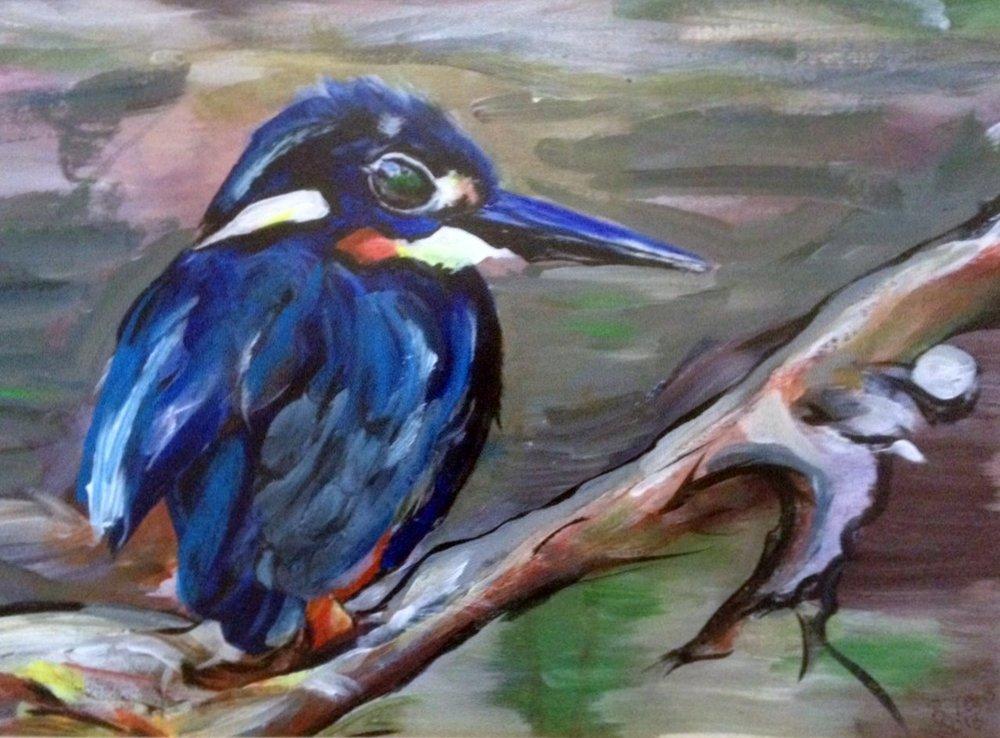 Turquoise+Kingfisher.JPG