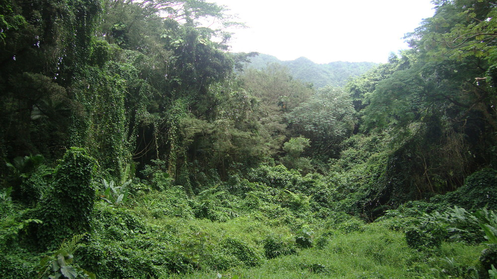 Honolulu Watershed Forest Reserve