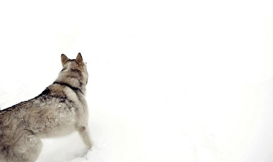 snowdog_1024.jpg