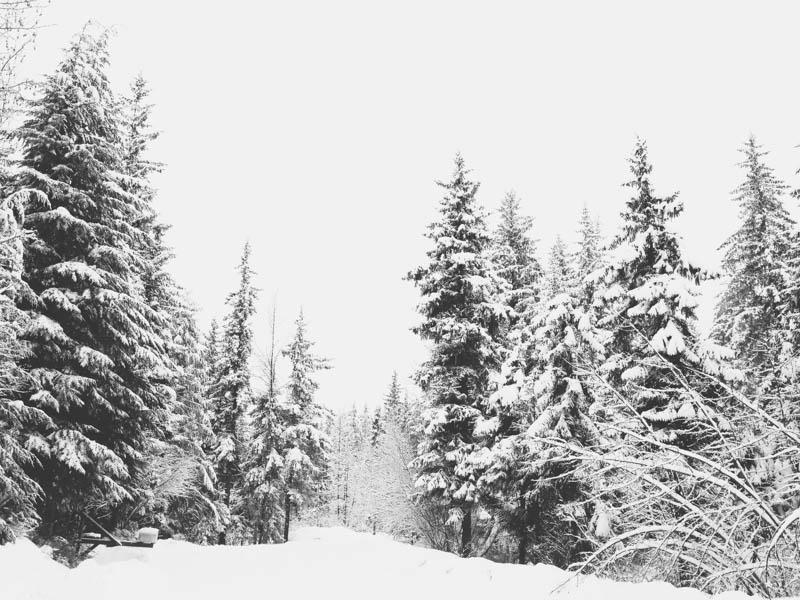 Alaska Winter | Mallorie Owens