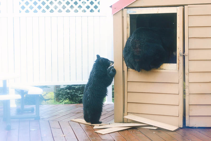 Black Bears on Porch | Mallorie Owens