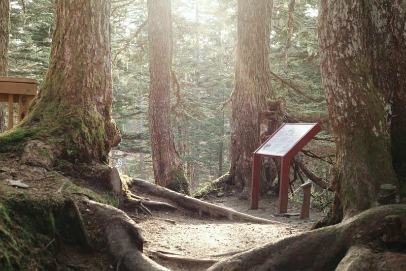 Mt. Roberts Hiking Trail, Juneau, Alaska | MALLORIE OWENS