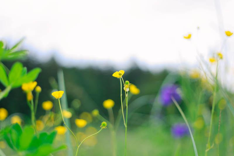 Wildflowers, Juneau, Alaska | MALLORIE OWENS