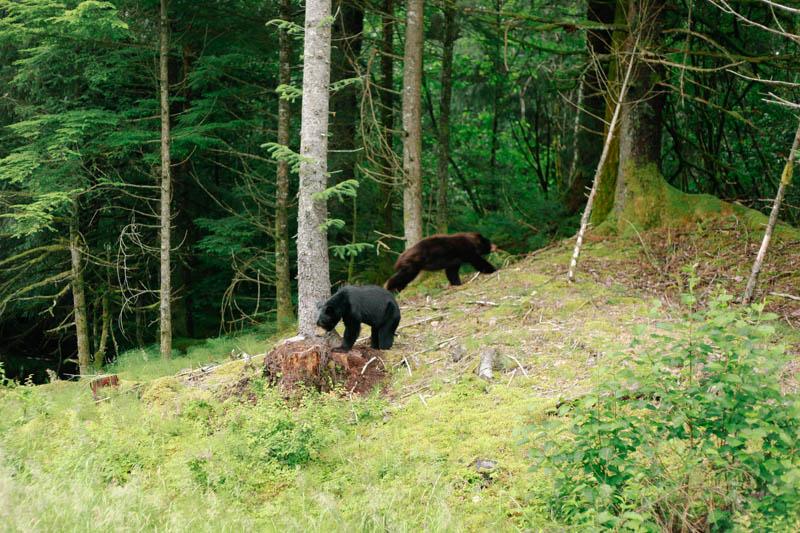 Black Bears | MALLORIE OWENS