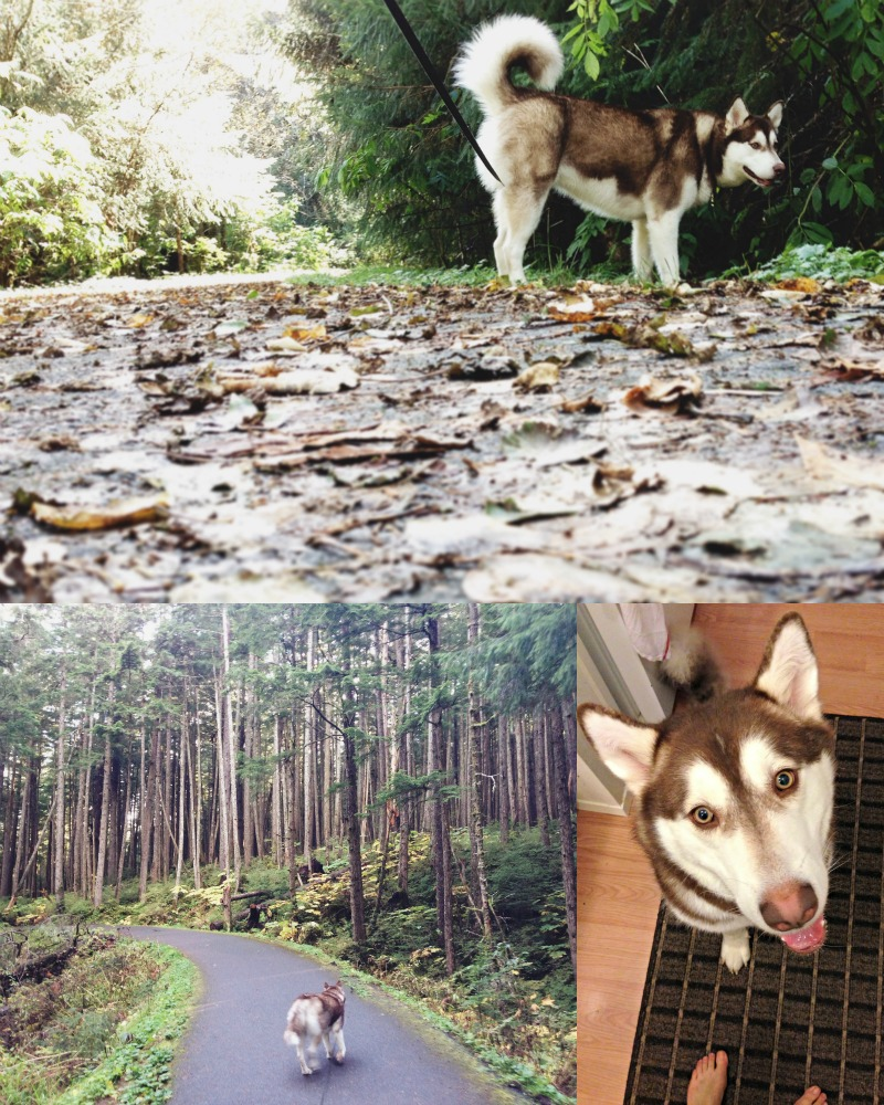 | walks with Atka |