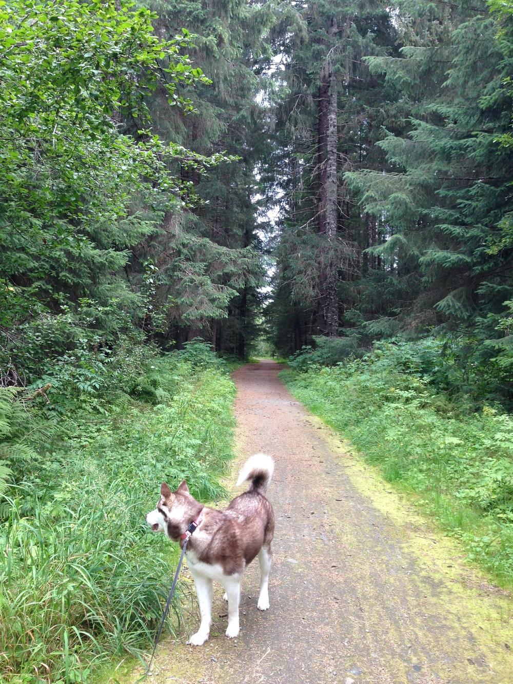 Montana Creek Trail, Juneau, Alaska | MALLORIE OWENS