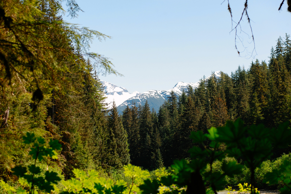 Places to Visit in Juneau, Alaska ↠ Herbert Glacier Trail | MALLORIE OWENS