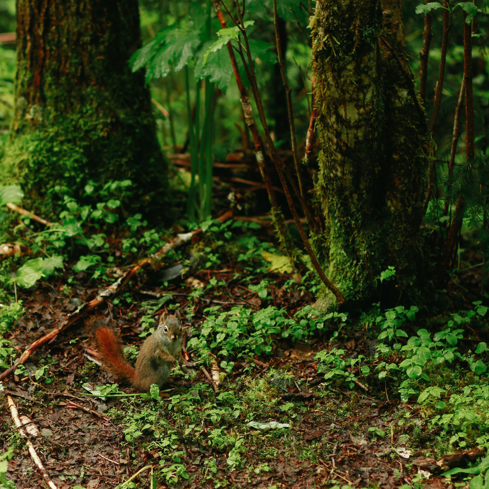 Squirrel in Alaska | MALLORIE OWENS