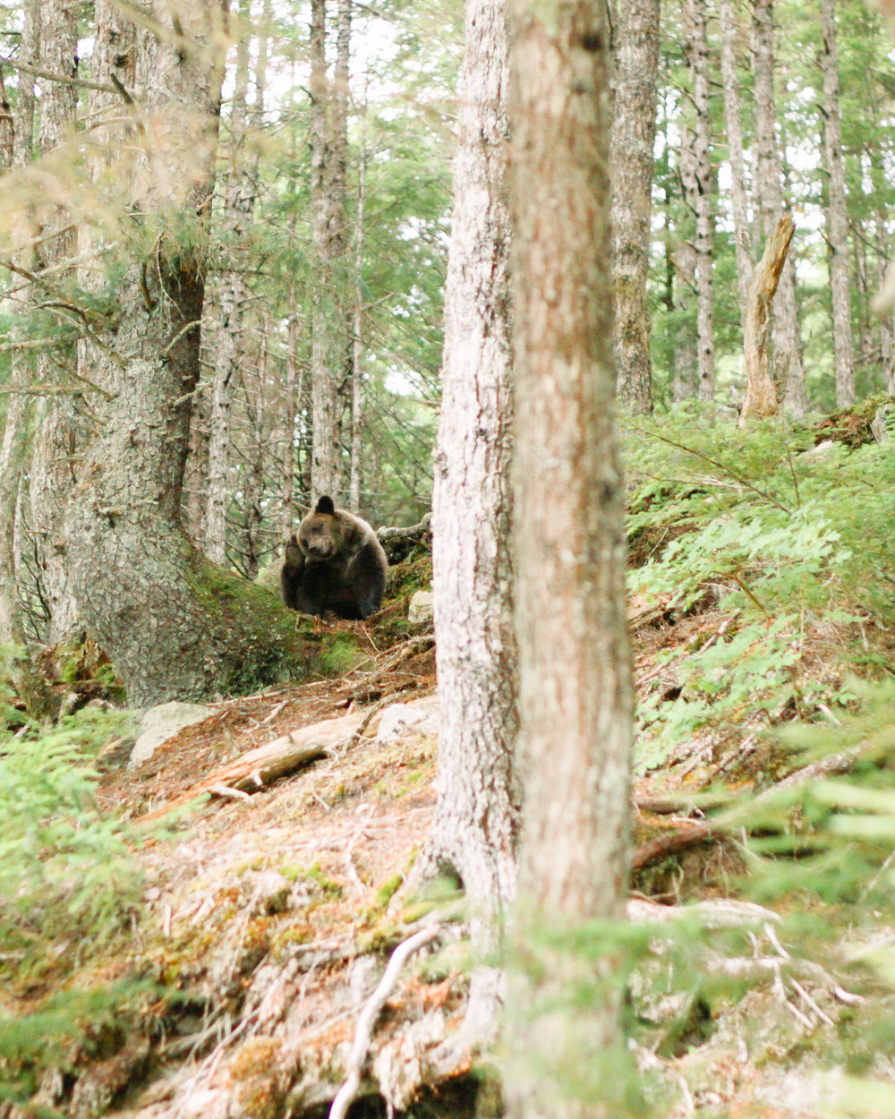 Grizzly Bear in Haines, Alaska Travel Blog | MALLORIE OWENS