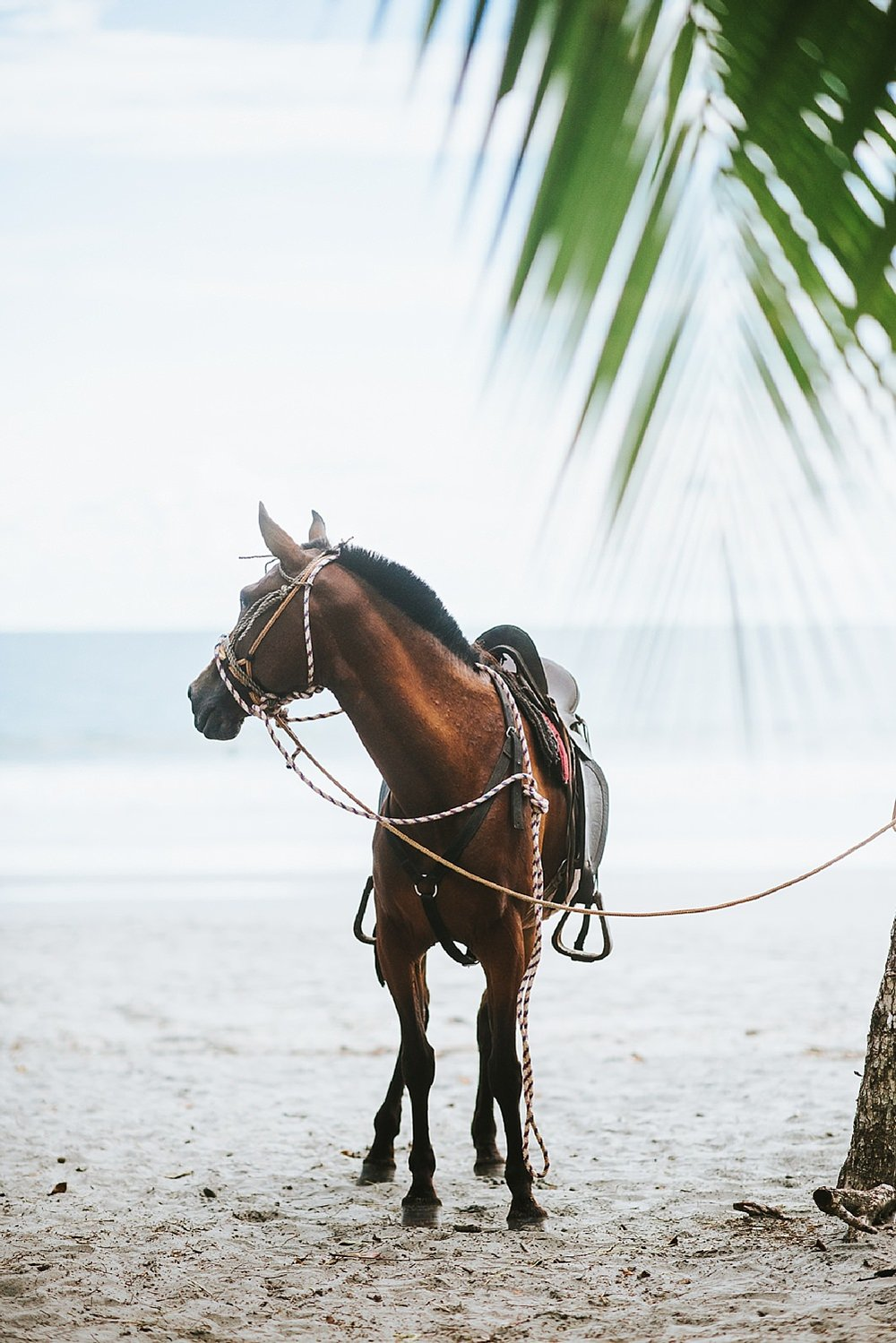 Beach-Horseback-Riding.jpg