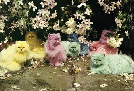 Rainbow Persians
