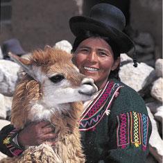 Llamas.Large