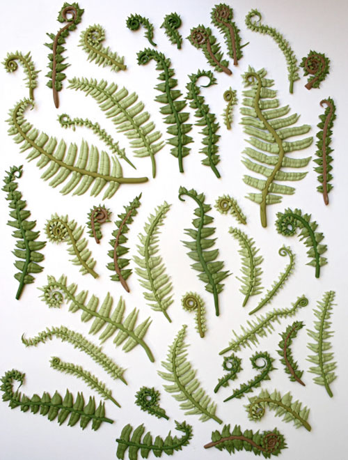 candy_ferns