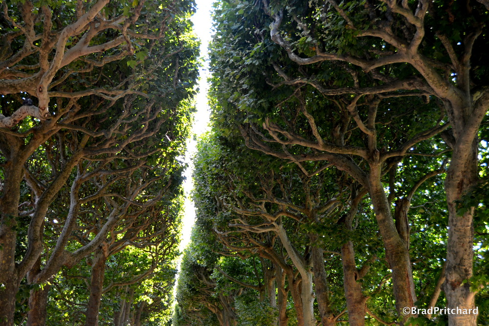 Le Jardin des Plantes - Light piercing through the manicured trees