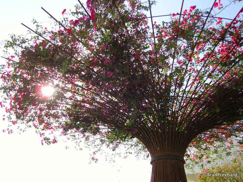 Gardens atJ. Paul Getty Museum