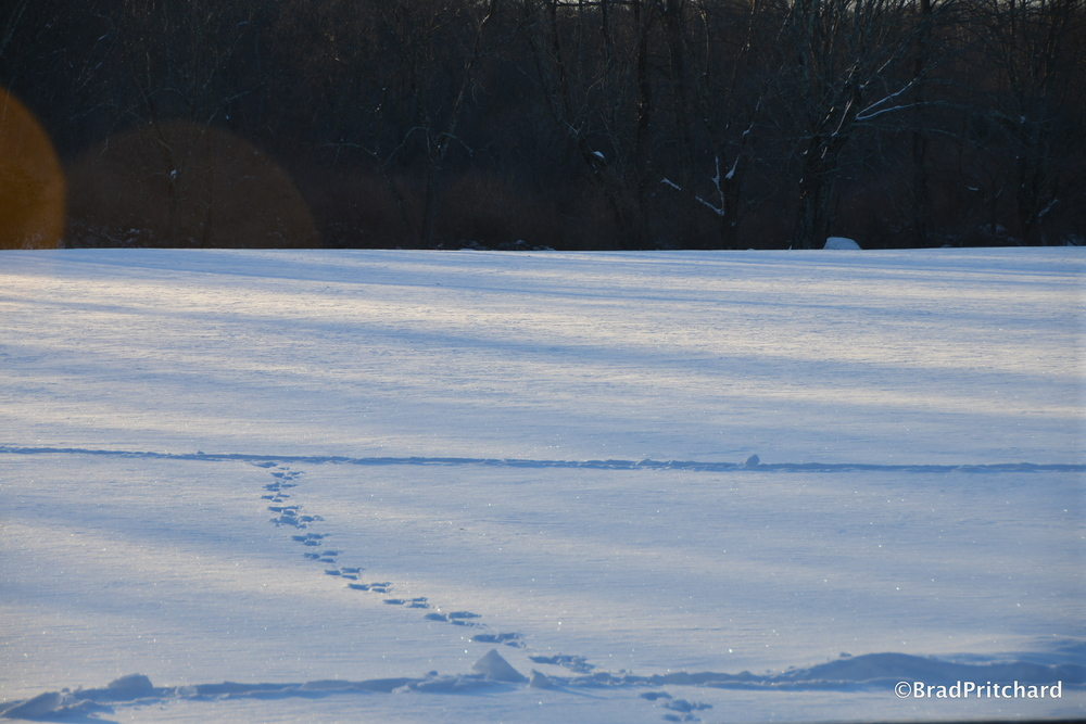 Long shadows, animal tracks