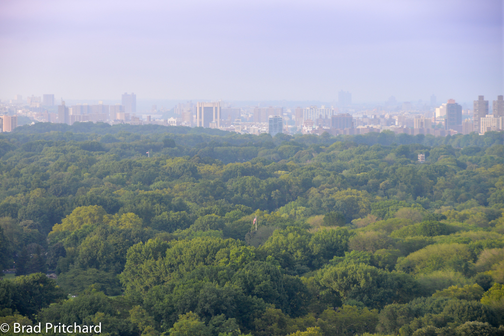 The gorgeous view of Central Park from The Roof