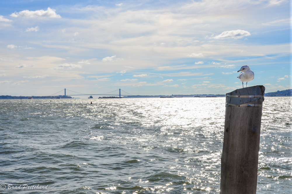 TheVerrazano–Narrows Bridge from Liberty Island.