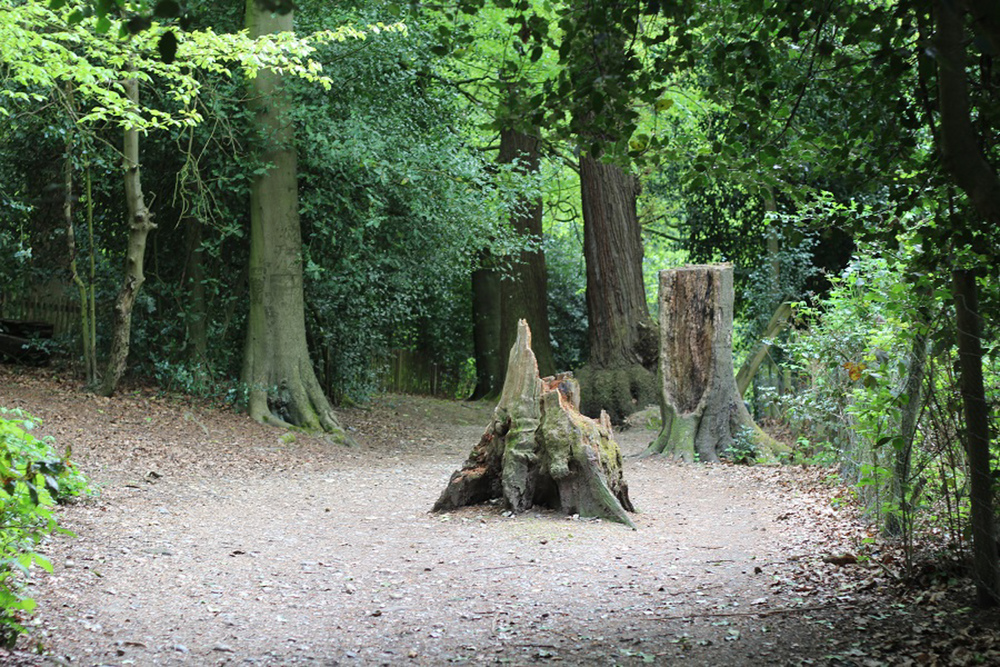 Woodlands within the Heath