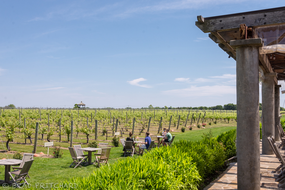 From the back patio: Tables along the vines and the gazebo off in the distance (June 2015).