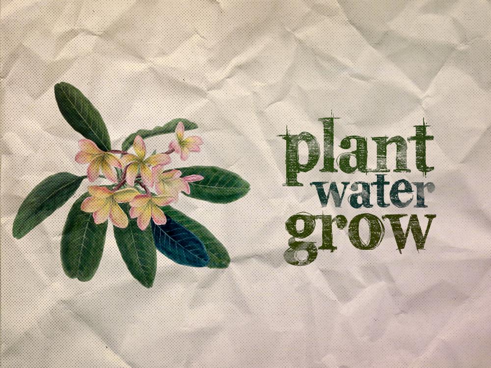 Centric_Plant_Water_Grow.jpg