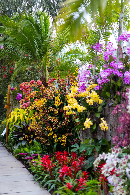 Orchid New York Botanical Garden Spring_-4.jpg