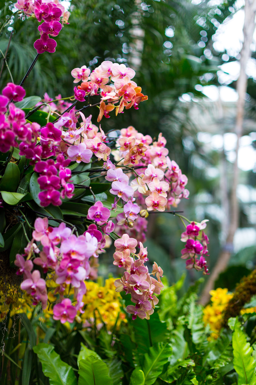 Orchid New York Botanical Garden Spring_.jpg