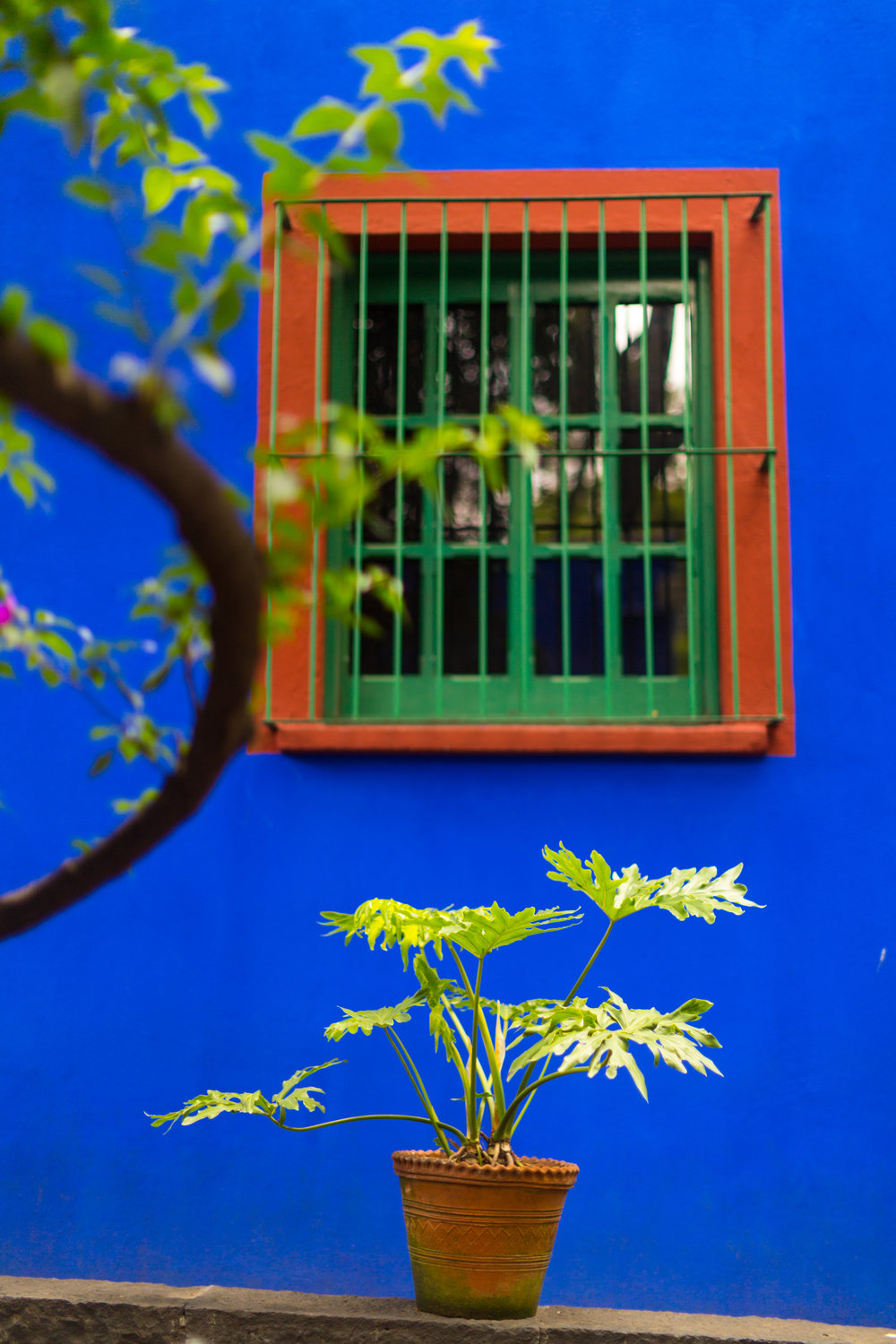 Mexico City Frida Kahlo La Casa Azul-6.jpg