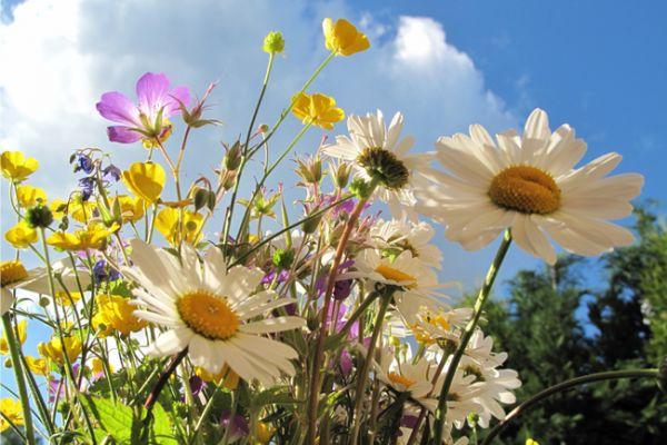 blomsterbilde_600_400_80.jpg