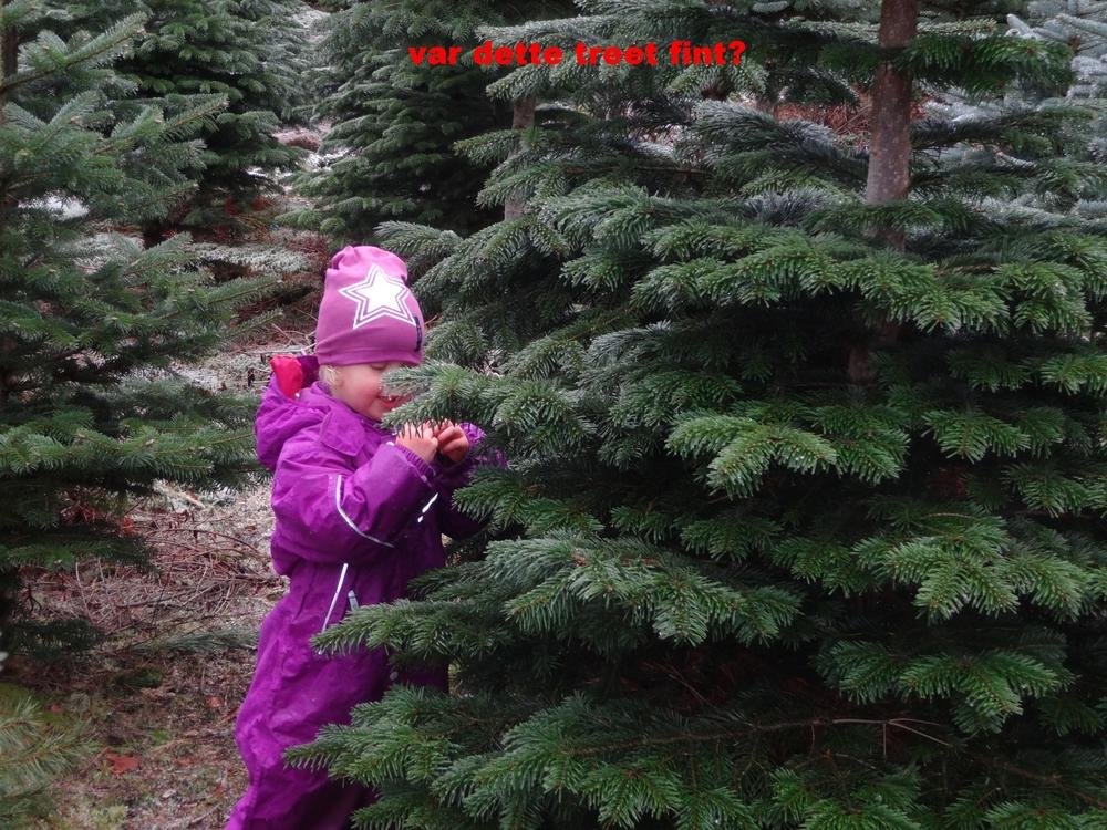 hente juletrær 023.JPG