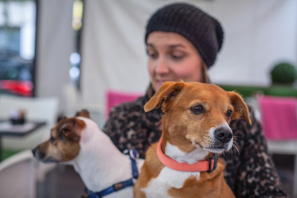 Psi su uvijek rado viđeni & dobrodošli na tavansko maloplacje