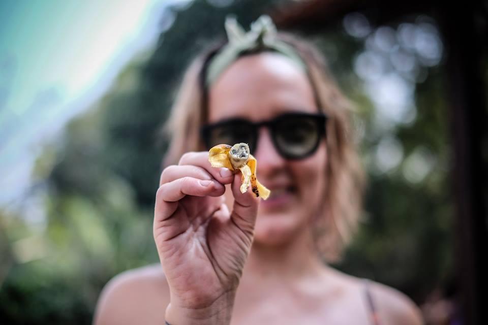 Photo: Sanjin Kaštelan / Sjeme banane! Goanske, male iz Jonathanova vrta