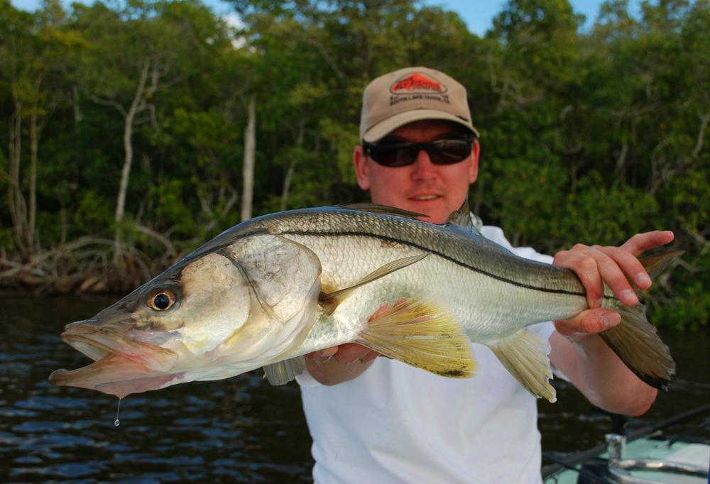 everglades-snook-7.jpg