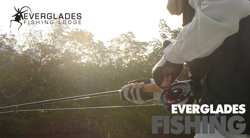 everglades-fishing.jpg