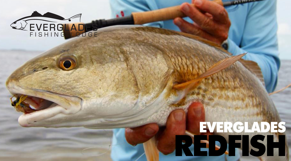 everglades-redfish-fishing.jpg