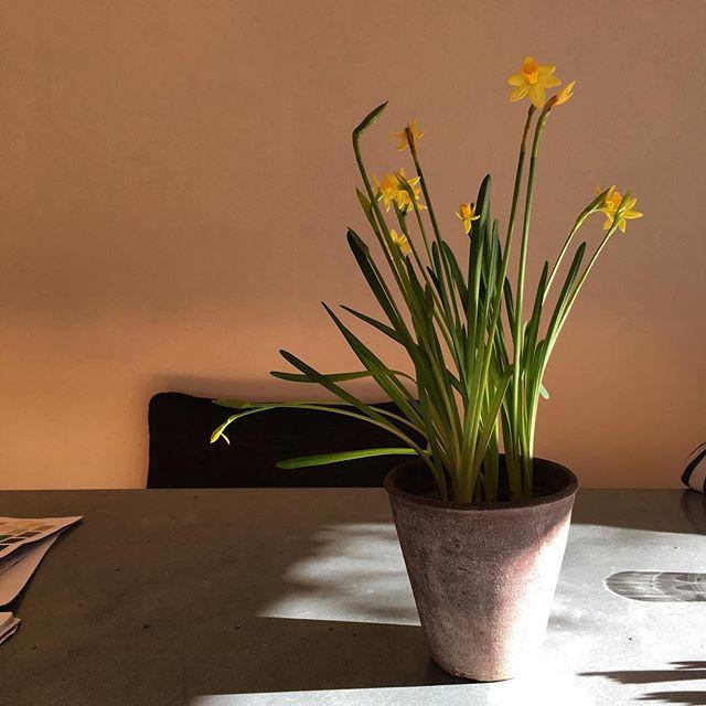 #Sunday #sunshine #spring #goodforthesoul