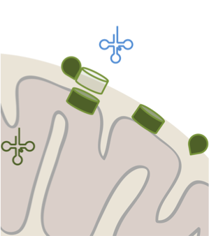 tRNA.png