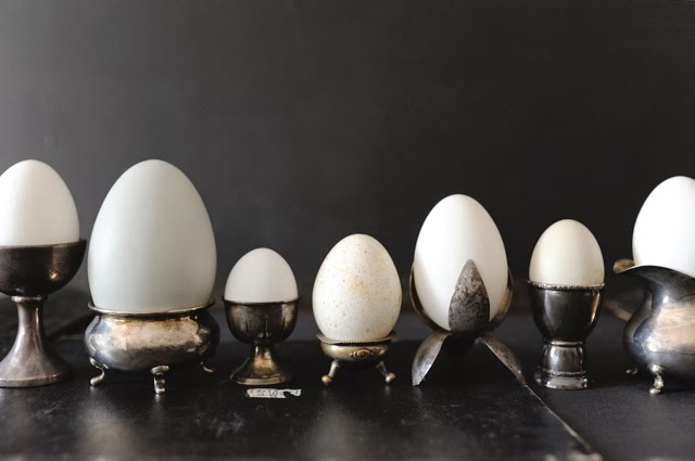 2014_02_eggs_1-1.jpg