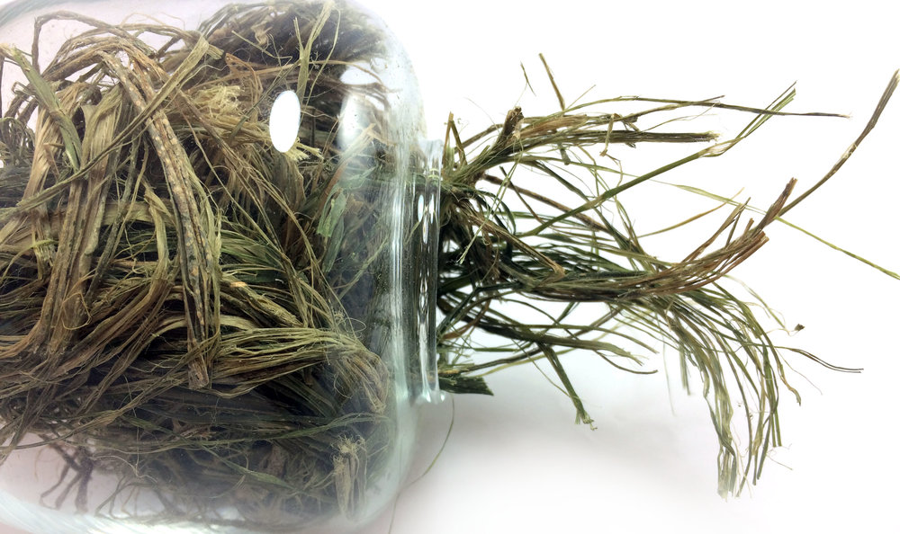 Sustainable biocomposites can be created using natural fibers like these hemp fibers above.