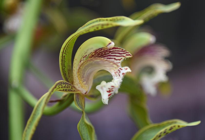orchid_sm.jpg