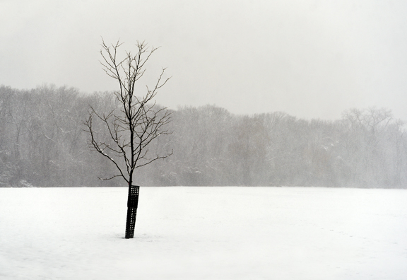 tree fieldsm.jpg